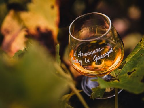 4. Armagnac and vineyard