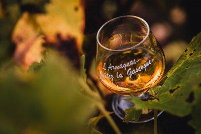LYinstant C photographe  Armagnac et vignobles
