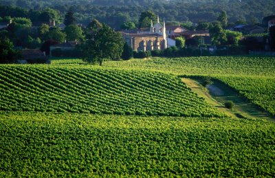 Les secrets du vignoble Bordelais