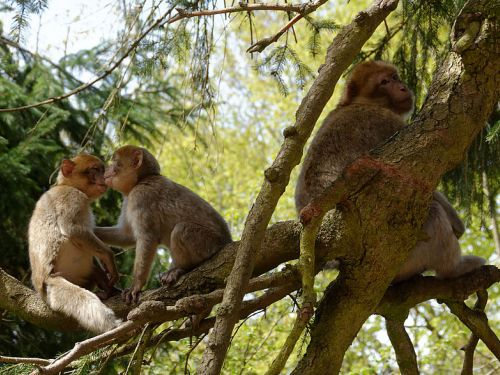 The monkey forest
