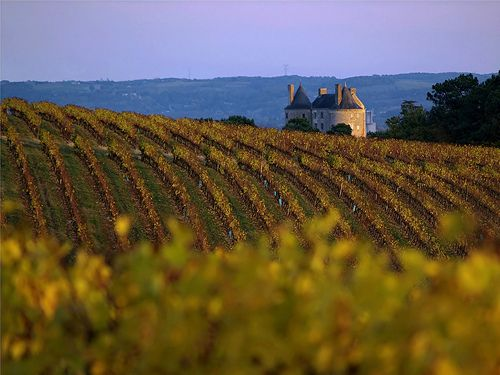 Wine and Gastronomy in the Lot et Garonne