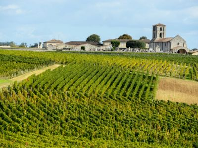 The Medoc wine region