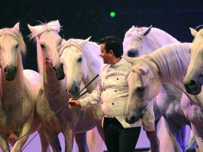 Sur un Air d'Equestria du 20 au 25 Juillet - votre chambre à petit prix