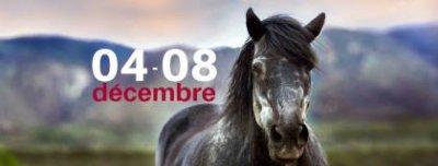 bigsalon_cheval19provisoire.jpg