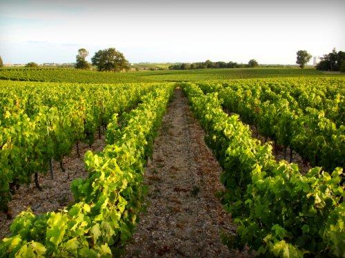 Escale en train : Bordeaux - Les Vignobles du Médoc
