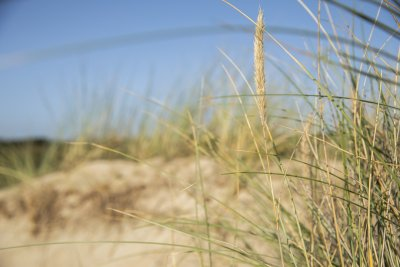 2020 09 Hotel Les Sables dOr Dune 13