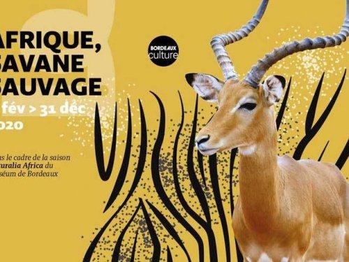 1 L exposition Afrique Savane Sauvage au Museum de Bordeaux   sciences et nature w2