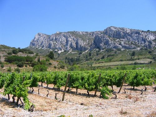 Vineyards and Wines of the Languedoc